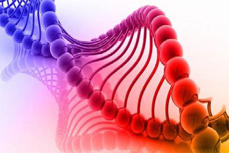 遺伝子分析検査